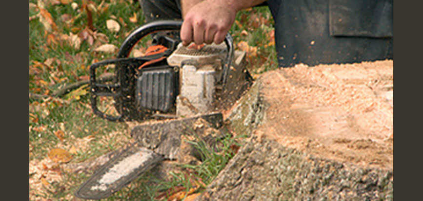 Preparing a stump for removal
