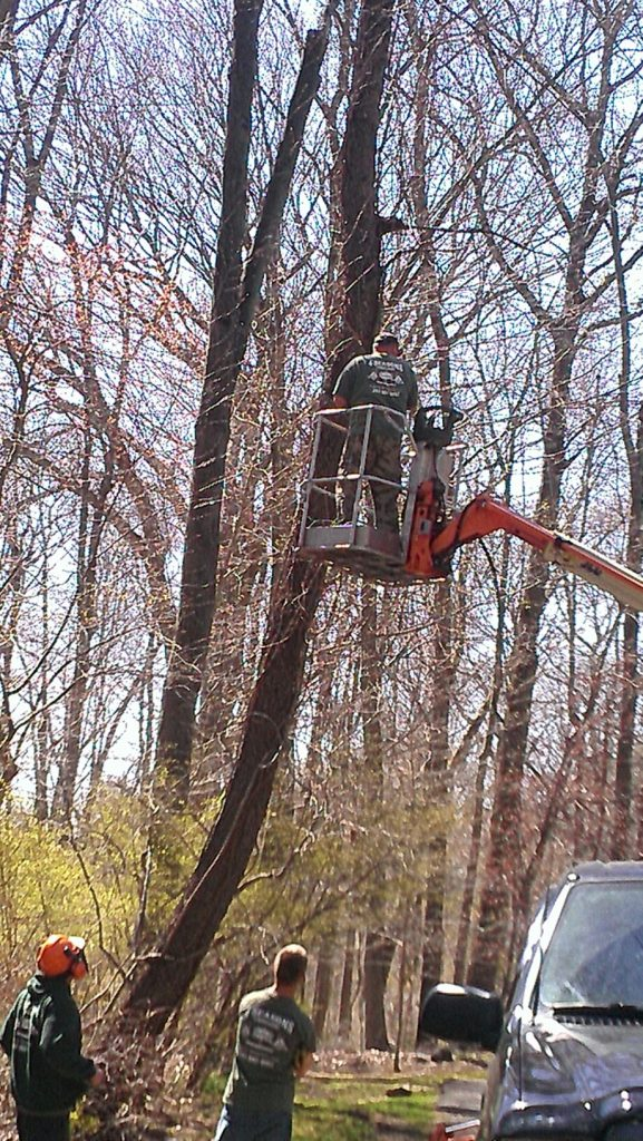 trimming tree with bucket truck Paradise Landscaping and Tree Removal