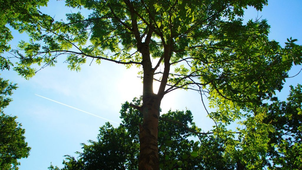 beautiful trees Paradise Landscaping and Tree Removal