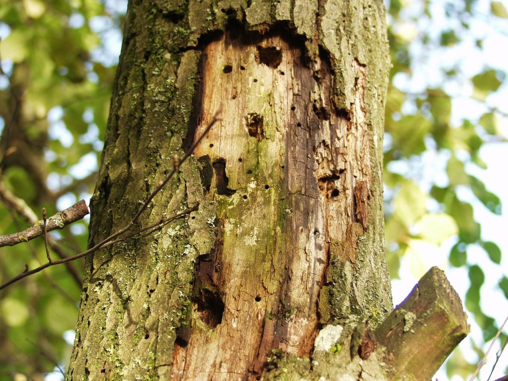 diseased tree Paradise Landscaping and Tree Removal