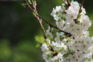 flowering tree Paradise Landscaping and Tree Removal