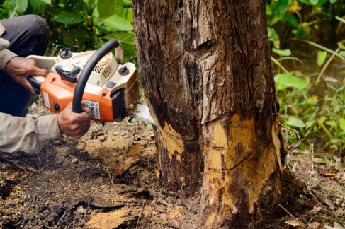 3 Reasons You Shouldn't Dare to Try DIY Tree Removal