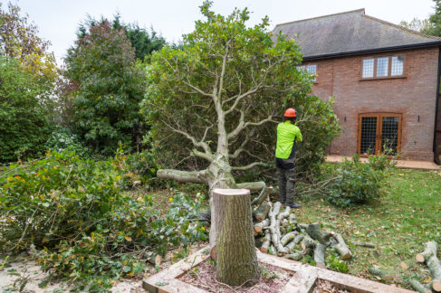 3 Telltale Signs Your Tree Needs to Be Removed