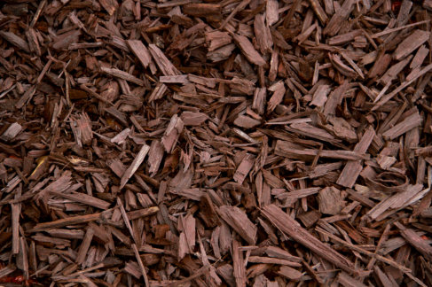 Popular Types of Mulch for Commercial Landscaping