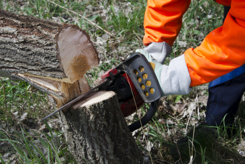 Permits: Is It Necessary in Tree Removal?