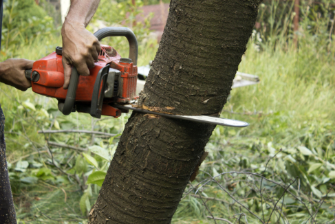 How to Do a Site Assessment Before Tree Removal