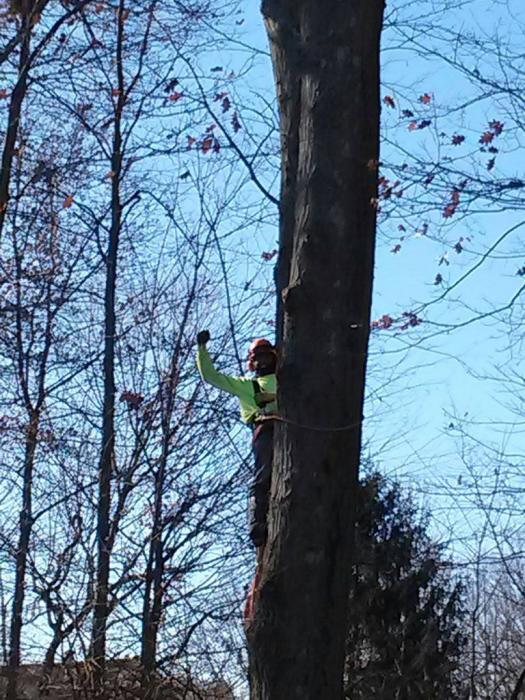 Our expert tree climbers care about your landscape.