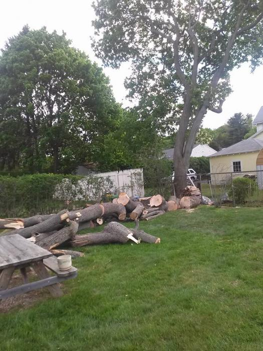 We carefully cut and remove trees, protecting your landscape features.