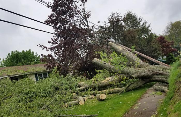 We have the expert crews to manage tree falls like this one.