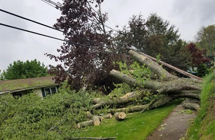 Breaking down a fallen tree that damaged a house.