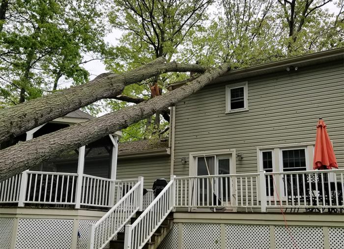 Fallen tree on roof of house.
